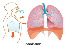 Picture on inhaling breathing system.