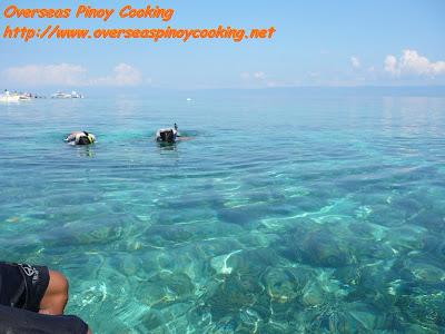 Snorkelling at Balicasag Island