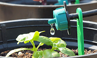 http://www.pepperagro.in/DRIP-IRRIGATION-KIT/M-DRIP-KIT-id-724833.html