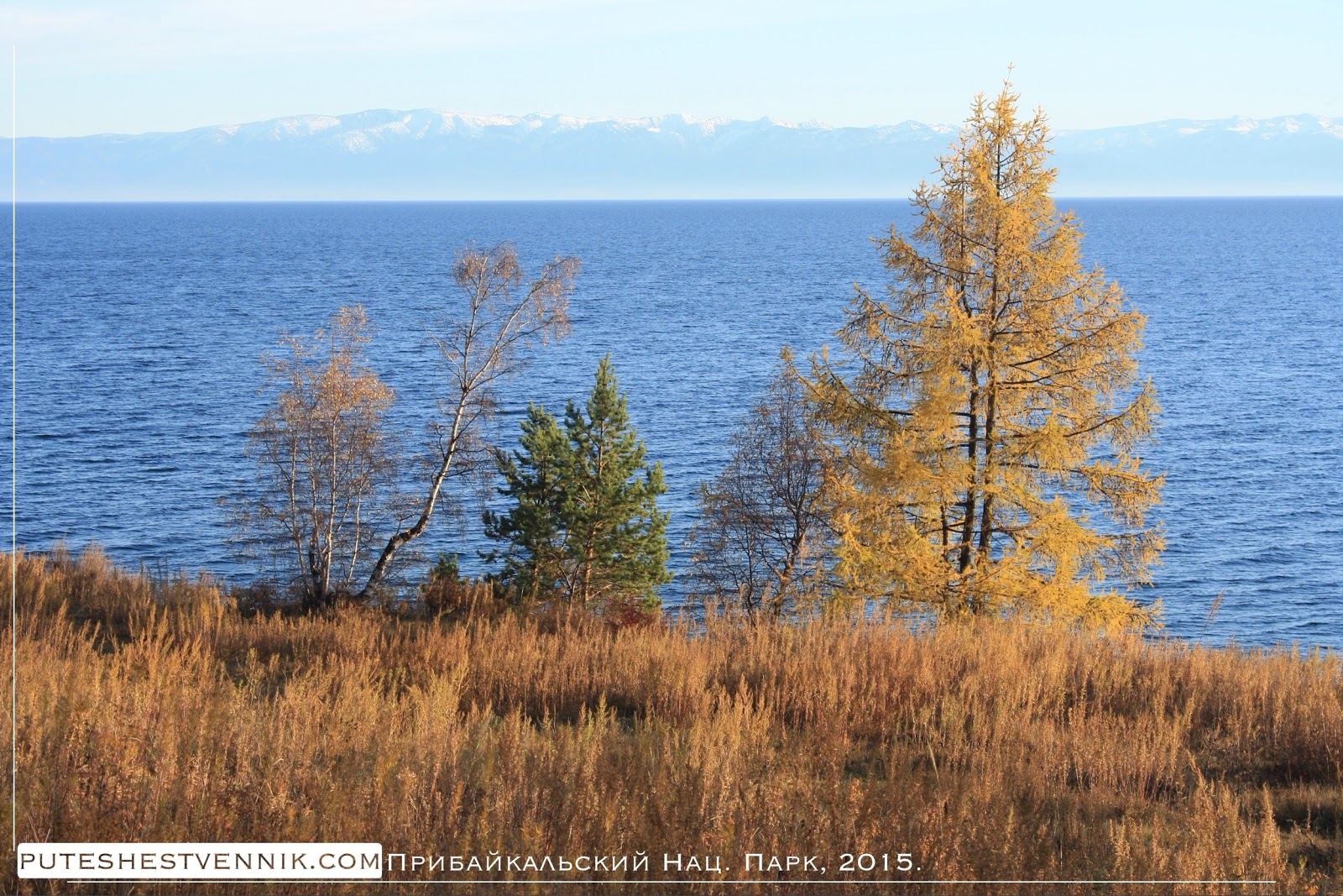 Лиственница на берегу Байкала