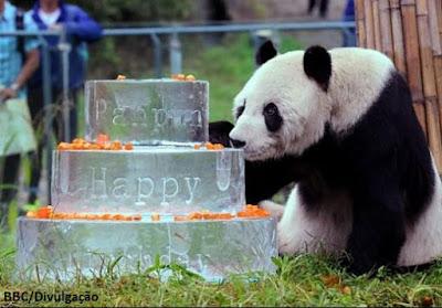 Panda, panda gigante, panda mais velho do mundo, extinção, china, pandas na china, conservação de pandas, filhotes de pandas, Pan Pan, conservação da natureza, natureza