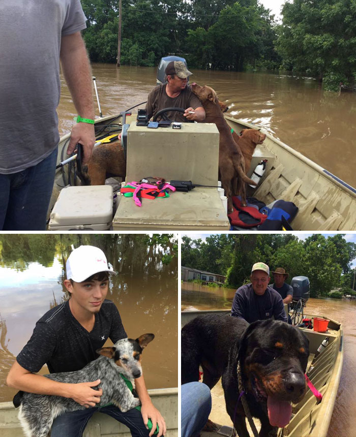 40 Times 2016 Restored Our Faith In Humanity - Dad And Son Rescued 30 Dogs Left Behind During The Flood In Brazoria County, Texas