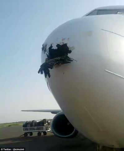 , Bird is lodged in plane's nose cone after colliding with it as it came in to land, Latest Nigeria News, Daily Devotionals & Celebrity Gossips - Chidispalace