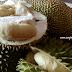 Petua Hilangkan Bau Durian Dalam Kereta