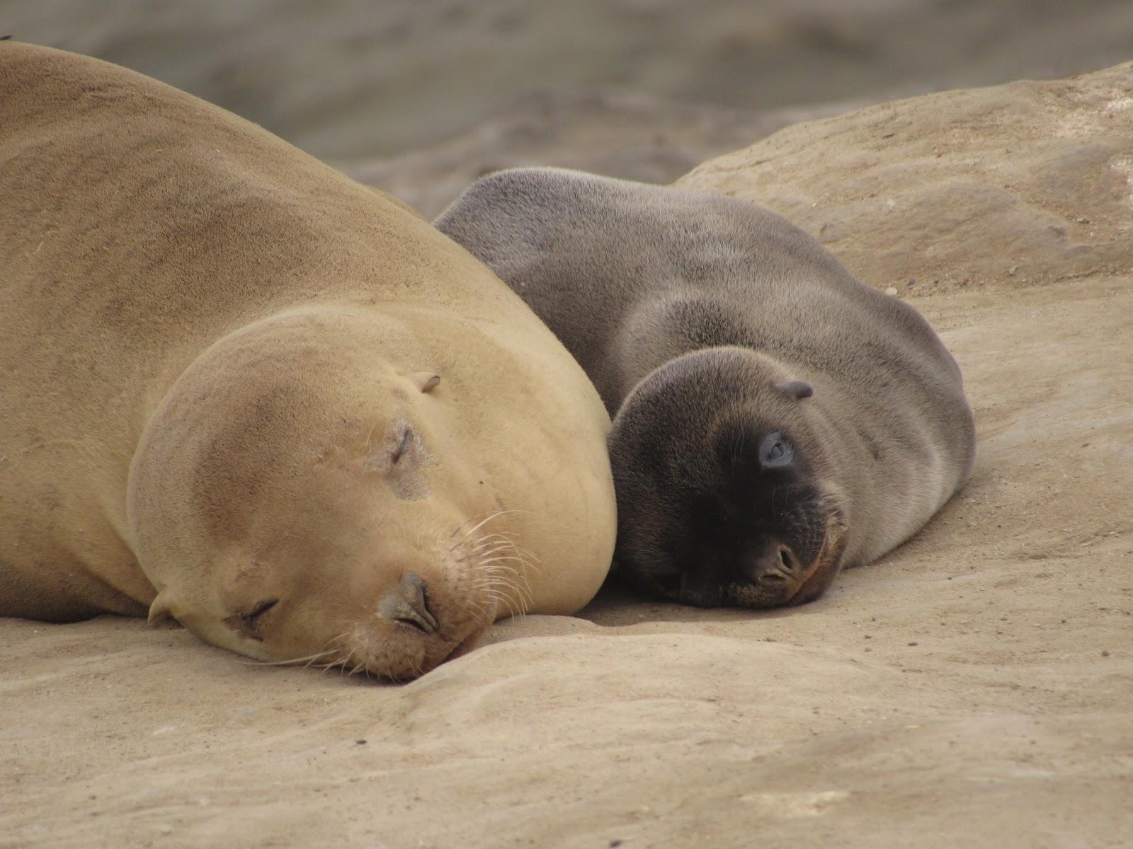 Ephemeral Curios Sea Puppies 2