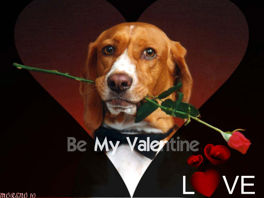 Off stuff for fun reads happy valentines - Valentine s day animal pics ...