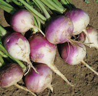 healthy vegetables,turnip benefits