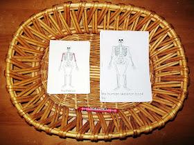 My Human Skeleton Book