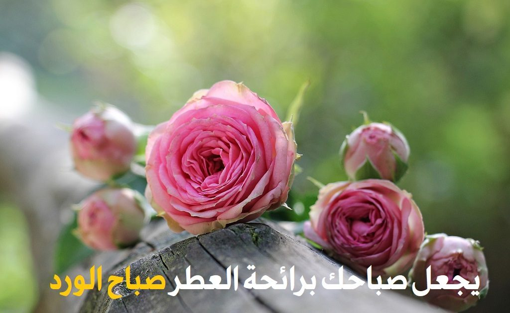 22310dbf4 صور صباح الخير 2019 HD اجمل كلام صباح الخير - يلا صور