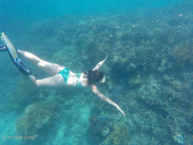 Haciendo snorkel por algún jardín de coral de las 17 islas