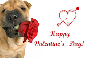 dog-with-rose-cutest-proposal-images-for-valentines-day.jpg