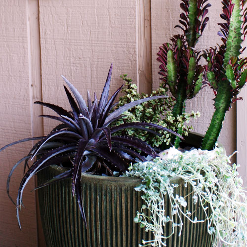 The Rainforest Garden Design Classy Containers With Black And White Plants