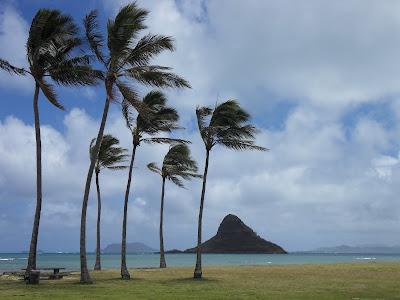 "V""eltenbummler - Vegan Verreisen: Aloha Hawaii - Vegan auf Oahu"