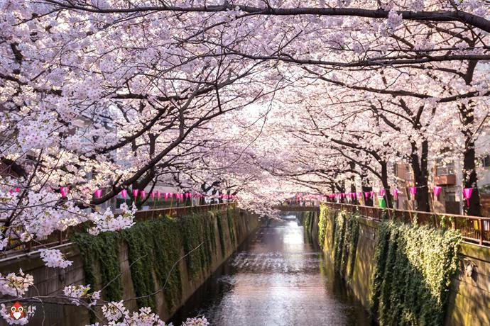 3. ทัวร์โตเกียว ชมซากุระที่แม่น้ำเมกูโระ