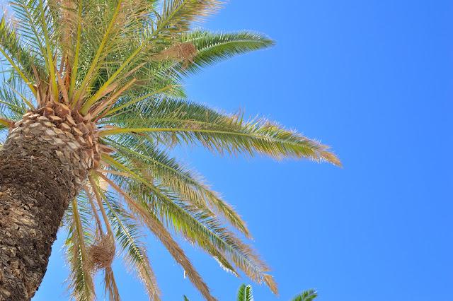 Split Palm Tree