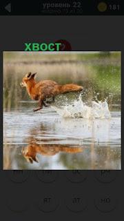 по воде бежит лиса на 22 уровне в игре 470 слов