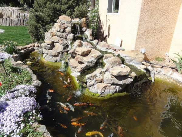 Pond repair how to build and maintain a proper koi pond for Koi pool liners