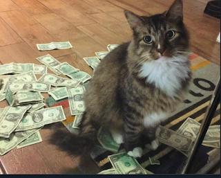 Un gato jugando con las reservas