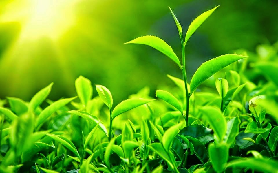 Manfaat Sinar Matahari Untuk Tumbuhan
