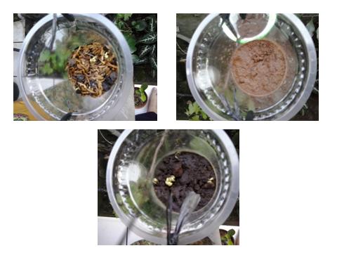Pengaruh Pupuk Terhadap Perkembangan Kacang Tanah Contoh Laporan Hasil Penelitian Roro Fajriyati Pengaruh Nutrisi Aneka Jenis Pupuk Terhadap Pertumbuhan Tanaman