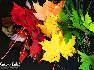 Teaching about photosynthesis or chlorophyll? Use this fun lab to teach students all about the pigments in the leaves around us.