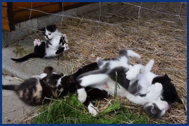 Suesse Babykatzen