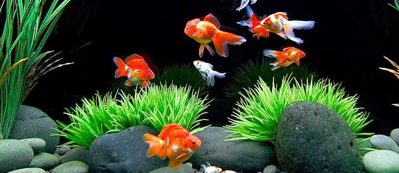 Galery Foto Aquascape Beserta Ikan Hias