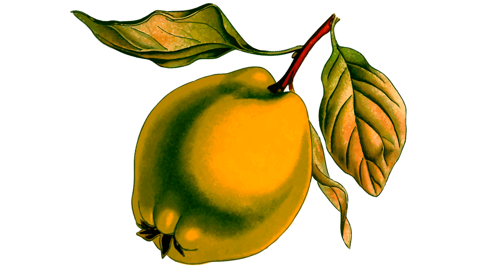 45 free fruits clipart fruits name for Clipart to download for free