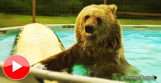 O urso nadador que (ainda) não consegue surfar