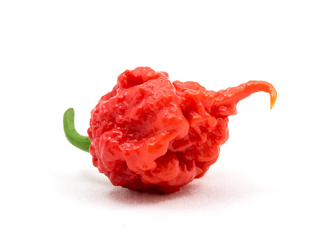 Trinidad moruga scorpion side close up
