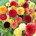 Memilih Jenis Tanaman untuk Vertical Garden