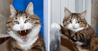 This Cat Is Taking Over The Internet With His Hilarious Facial Expressions Despite His Problem