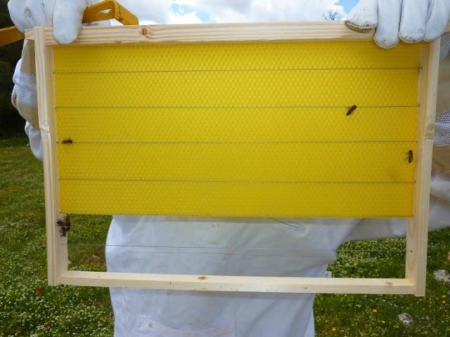 Άχτιστες κηρήθρες: Αποθήκευση για να τις χτίζουν οι μέλισσες γρήγορα...
