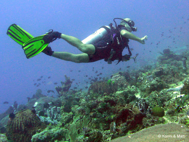 house reef, celebes sea, sulawesi, indonesia