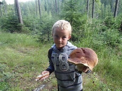 grzyby 2017, grzyby w lipcu, grzyby na Orawie, borowik szlachetny, siedzuń jodłowy, spotkanie z padalcem, padalec, beznoga jaszczurka, miedzianka