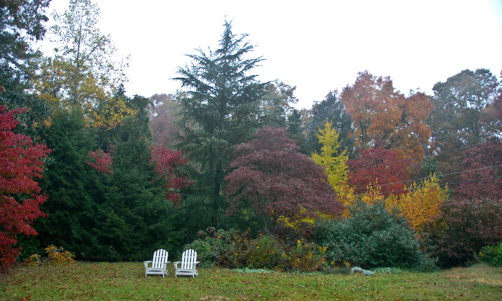 http://naturalgardening.blogspot.com/2011/11/more-fall-color.html
