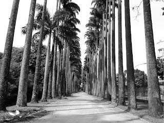 Alameda das Palmeiras, Jardim Botânico do Rio de Janeiro
