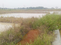 Pembangunan Balai Benih Ikan Banten Diduga Terjadi Penyimpangan