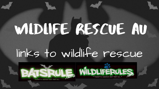 WildLife Rescue AU