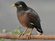 Sitanadi Wildlife Sanctuary, Dhamtari, Chhattisgarh by www.EChhattisgarh.in