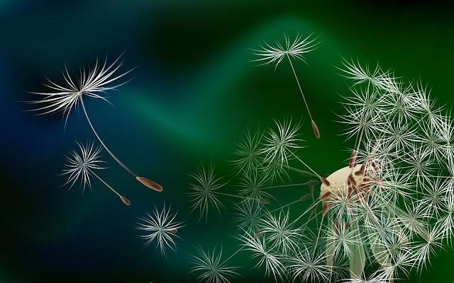 Lóa mắt loạt hình nền máy tính hoa bồ công anh trong gió