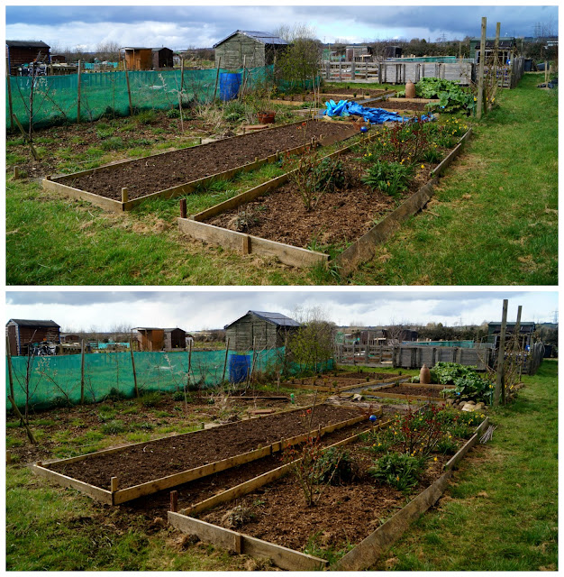 14b overview - 'growourown,blogspot.com' ~an allotment blog