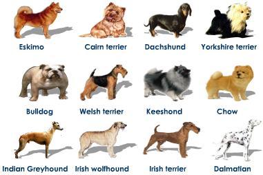 Razas De Perros Mascotas En Casa