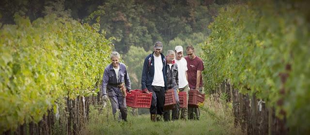 Informações sobre a vinícola Avignonesi