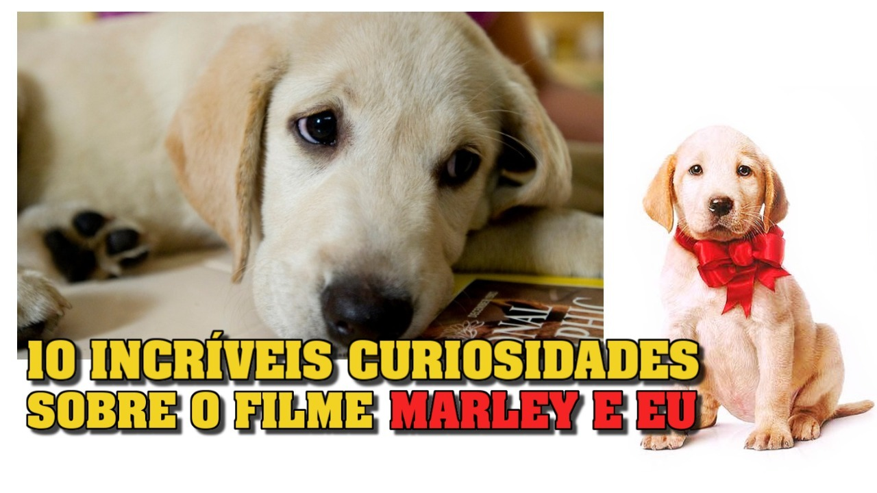 10 INCRÍVEIS CURIOSIDADES SOBRE O FILME MARLEY E EU