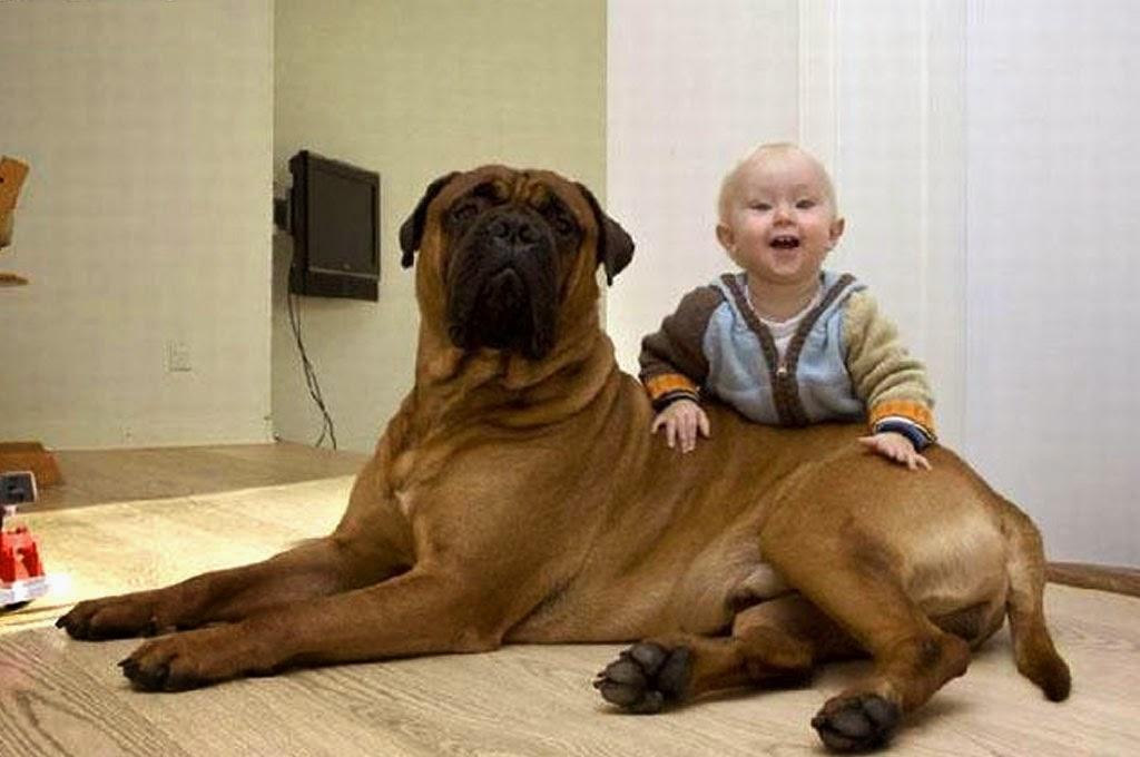 gambar-bayi-lucu-dan-anjing-kesayangan