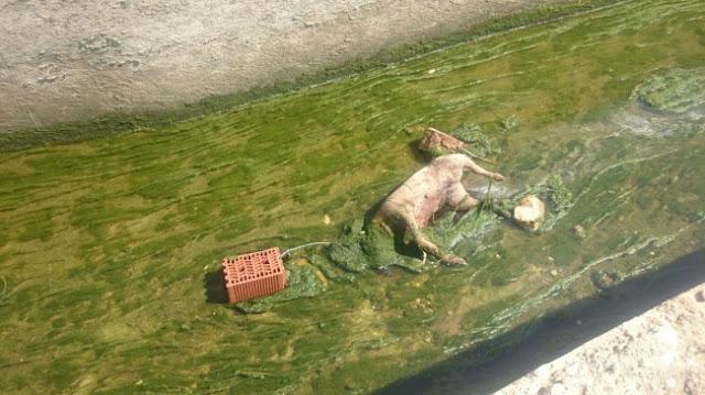 Perro encontrado en una acequia con un ladrillo al cuello