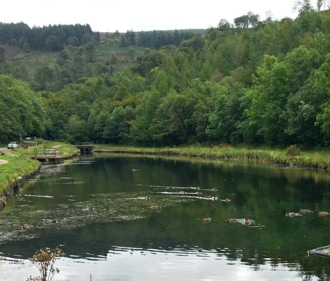 lake-cwm-carn-forest