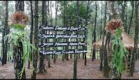 Bukit Salju Wisata Istagramable Nganjuk