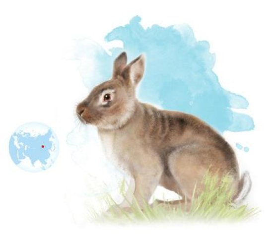 An ancestor of the rabbit connects Europe and Asia